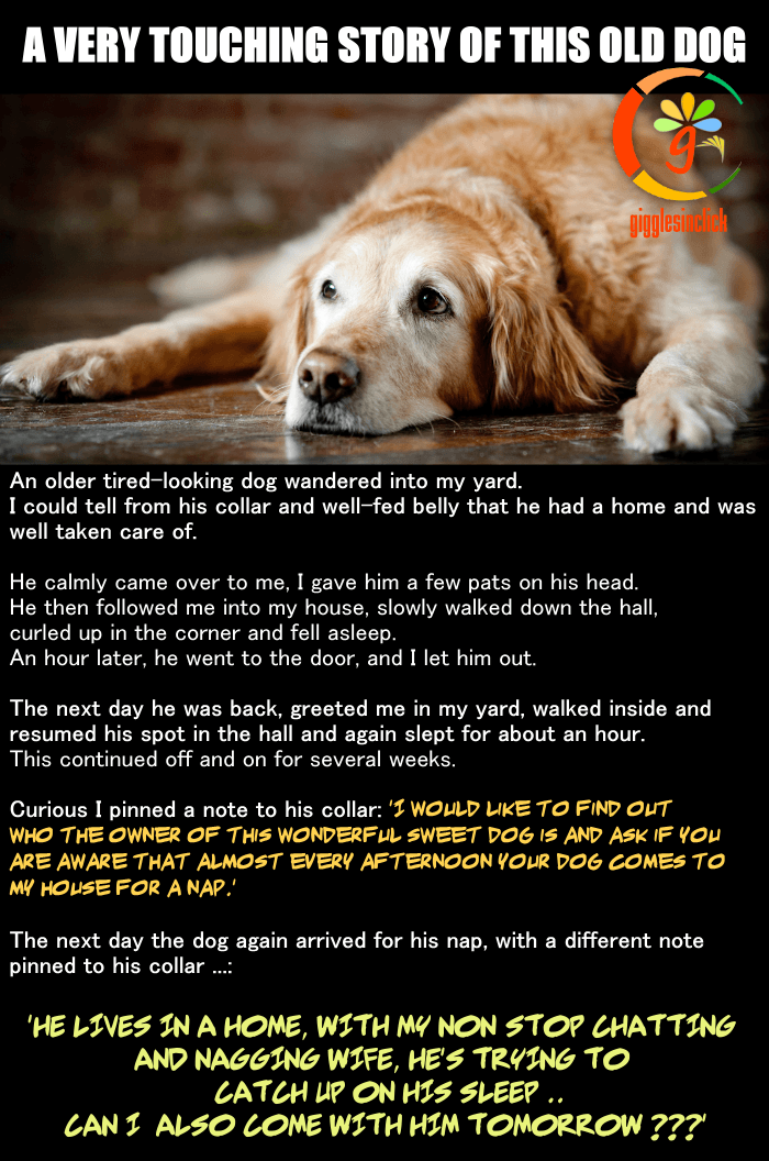 old_dog, old, dog, coller, yard, true story, jokes, lol, funny images, giggles, husband wife relationship, gigglesinclick.com